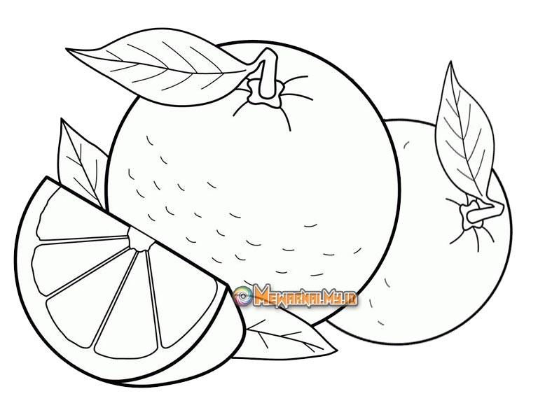 buah jeruk untuk mewarnai anak tk dan paud