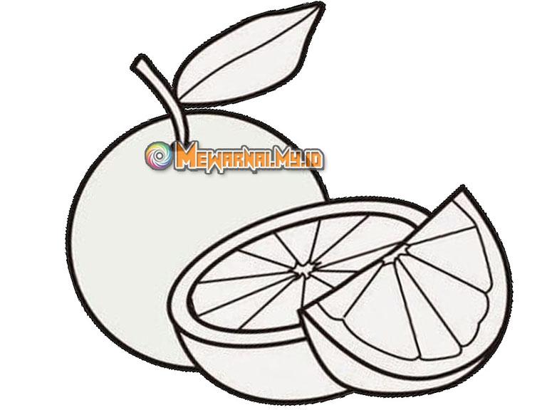 gambar sketsa buah jeruk untuk mewarnai